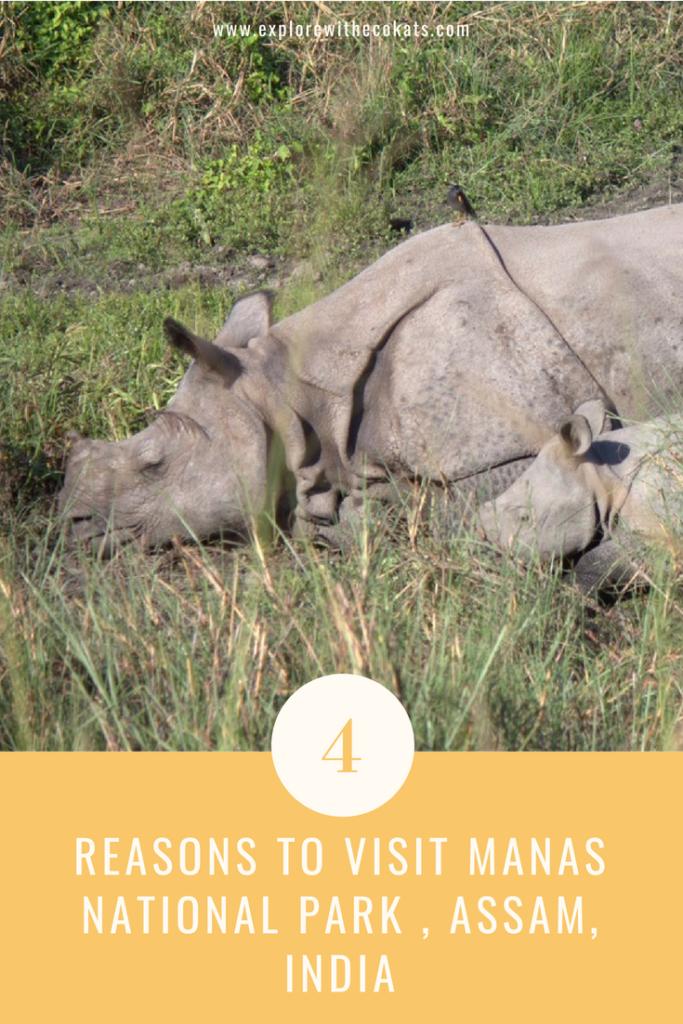 #ManasNationalPark #Assam #Indianrhino