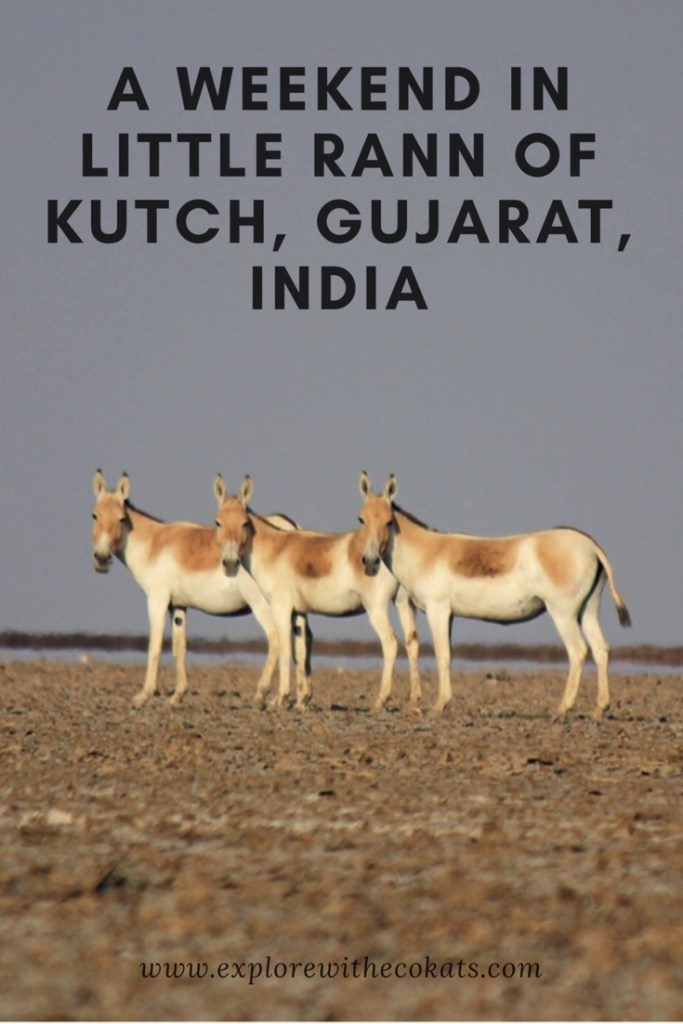 #Littlerannofkutch #LRK #Gujarat