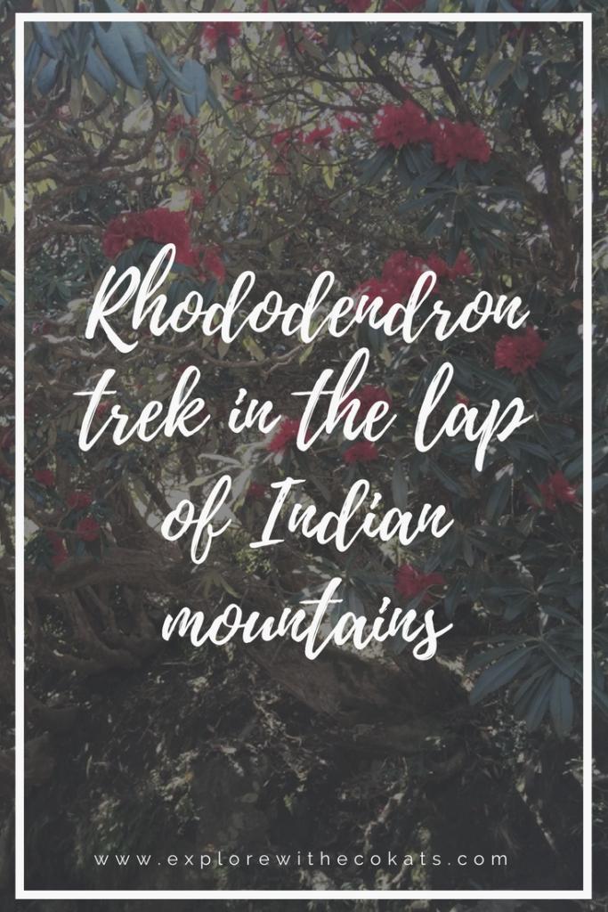 #Triund #rhododendron #trek