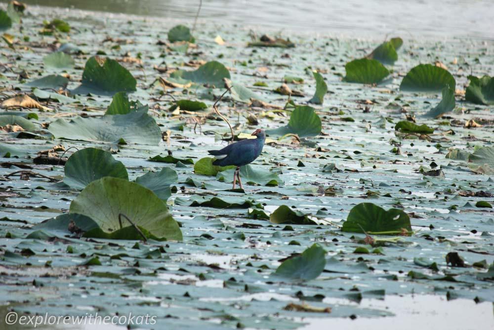 Birdwatching destinations around Ahmedabad