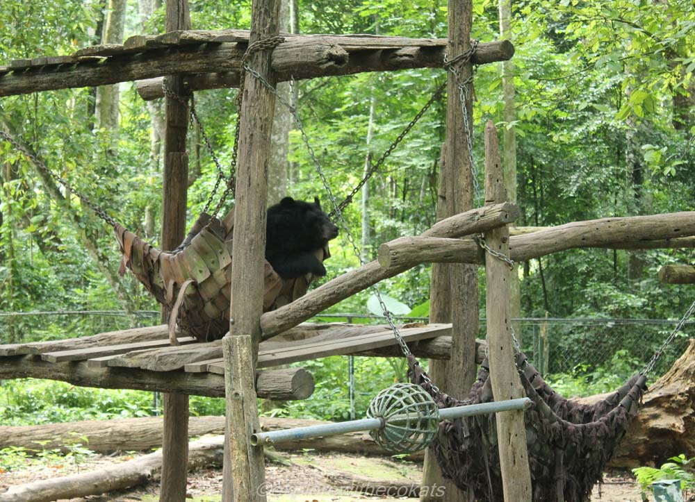 Kuang Si Bear Rescue centre
