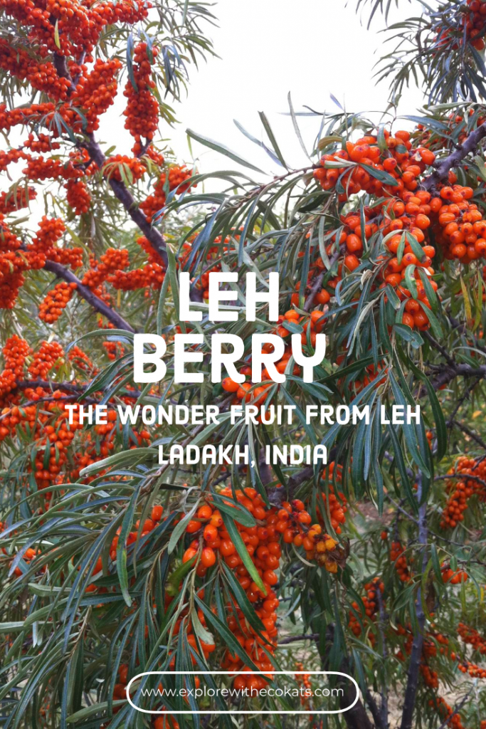 Leh berry from #lehladakh region of #India #wonderfruit #healthyfruit