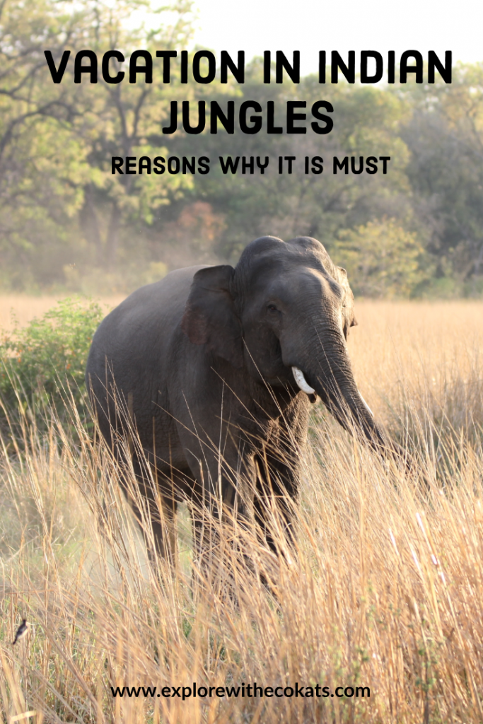 Vacation in the Indian jungles: Why you must! #incredibleindia #sustainabletourism #ethicaltourism #ecotourism #indianwildlife