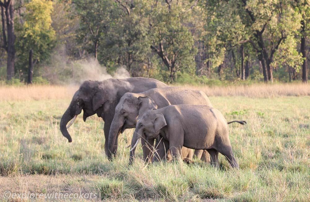 A herd of elephants in Jim Corbett National Park